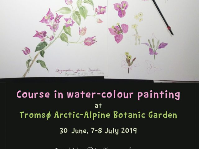 Course in water-colour painting at Tromsø Arctic-Alpine Botanic Garden