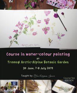 Course in water-colour painting at Tromsø Arctic-Alpine Botanic Garden